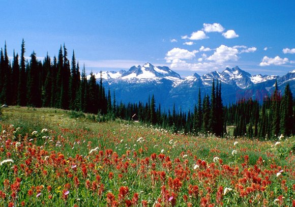 Mount_Revelstoke_National_Park_Revelstoke_British_Columbia.jpg