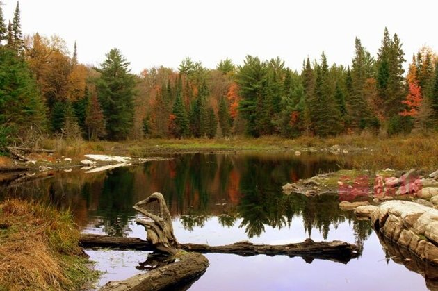 Mizzy Lake.jpg