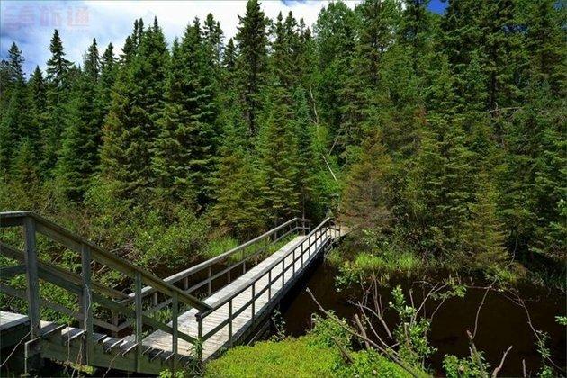 Big Pines.jpg
