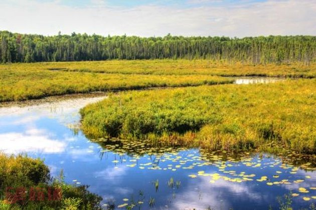 Spruce Bog Boardwalk2.jpg