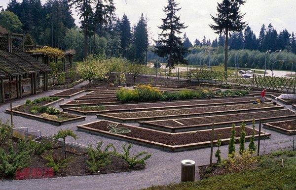 food-garden.jpg