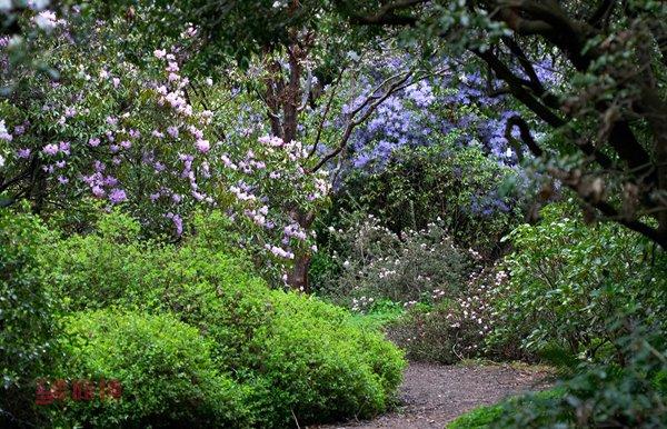 asian-garden.jpg