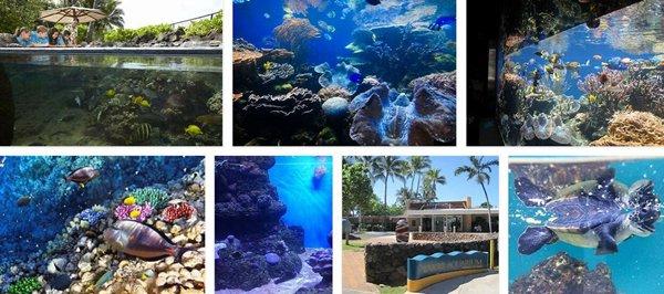 Waikiki Aquarium.jpg
