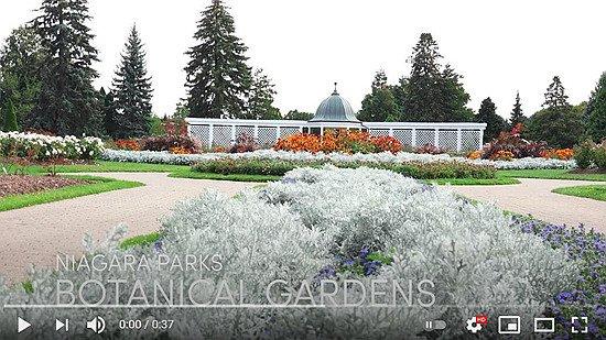 Vlog-Garden.jpg