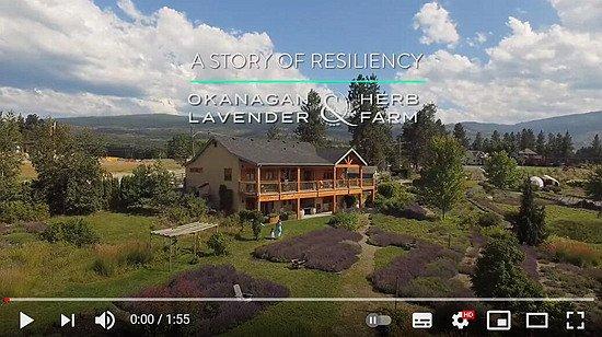 Vlog-farmLavender.jpg